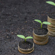 Tress growing on coins, csr, sustainable developme...