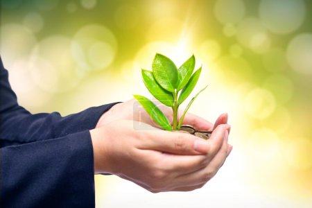 Photo pour Palmiers avec un arbre poussant à partir d'un tas de pièces soutenues par les mains de l'enfant - mains donnant un arbre poussant sur les pièces aux mains de l'enfant - csr - entreprise verte - éthique des affaires - image libre de droit