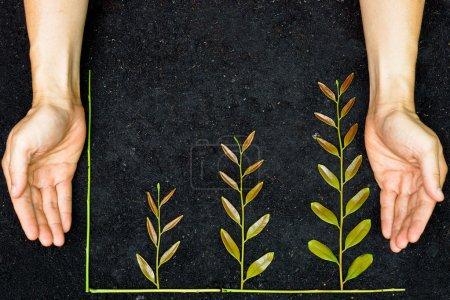 Foto de Manos sosteniendo árboles dispuestos como un gráfico verde sobre el fondo del suelo - csr - desarrollo sostenible - plantación de un árbol - responsabilidad social corporativa - Imagen libre de derechos