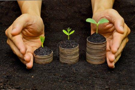 Photo pour Arbres poussant dans une séquence de germination sur des piles de pièces d'or - csr - développement durable - arbres poussant sur des piles de pièces - économiser de l'argent - image libre de droit