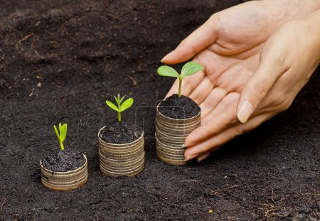 Photo for Trees growing in a sequence of germination on piles of golden coins - csr - sustainable development - trees growing on stack of coins - saving money - Royalty Free Image