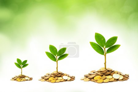 Photo for Trees growing on piles of golden coins with green background - Royalty Free Image