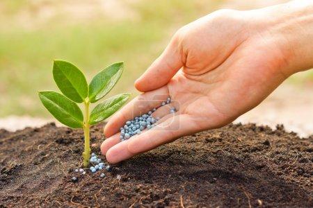 Photo pour Une main donnant de l'engrais à une jeune plante - planter un arbre - image libre de droit