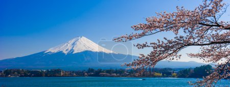 Fujisan , Mount Fuji view from Kawaguchiko lake, Japan with cher