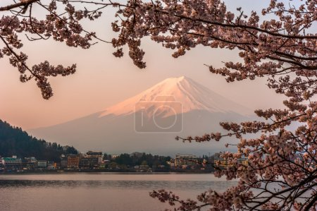 Photo for Fujisan , Mount Fuji view from Kawaguchiko lake, Japan with cherry blossom - Royalty Free Image