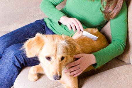 Girl combing her dog
