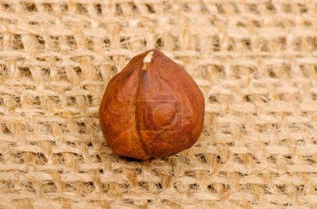 Hazelnuts on burlap background