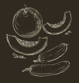 Vector hand drawing juicy melons