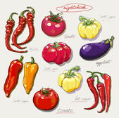 Collection of hand-drawn vegetables vector illustration