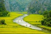 Proud uvnitř rýžových polí v tam coc Chráněná krajinná oblast, vietnam