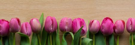 Photo pour Pink tulips panorama with several tulips in a row - image libre de droit