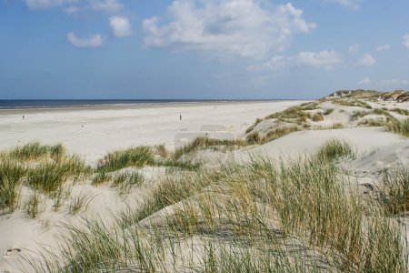 Sand dunes at the coast of Holland