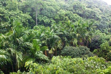 Photo pour Forêt tropicale sous la pluie - image libre de droit