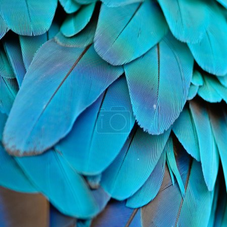 Photo for Pattern of Blue and Gold Macaw feathers - Royalty Free Image