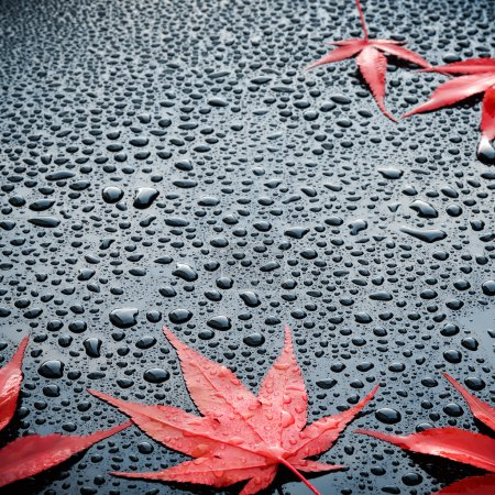 Water drops and red leafs on a polished black lacquer surface