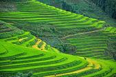 Rýžové terasy v sapa, vietnam