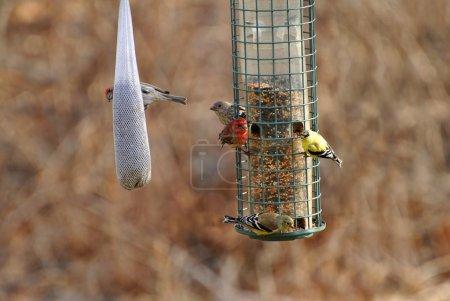 Busy Bird Feeder Eary in Spring