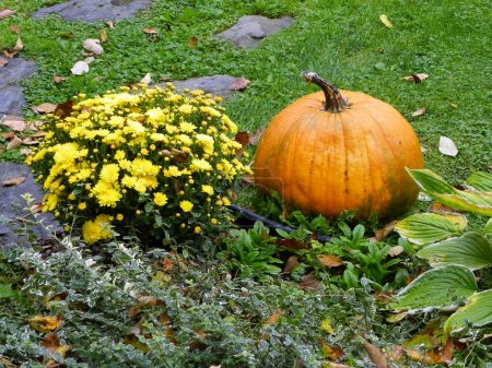 Yellow Chrysanthemums with an Orange Pumpkin in Autumn