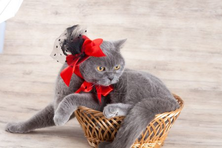 Cat wearing red hat