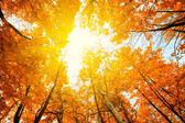 Sun shining in the sky among treetops in an autumn park