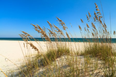 Photo for Beautiful Perdido Beach in Pensacola, Florida. - Royalty Free Image