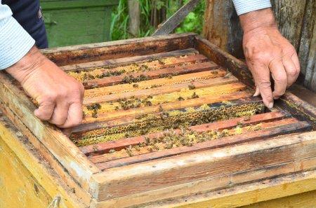 bee beehive