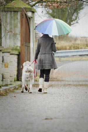 Photo pour Femme avec un parapluie promenades avec son chien sous la pluie à l'extérieur . - image libre de droit