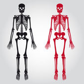 skeletons - human bones set eps10