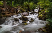 Forest stream running over rocks, a small waterfall