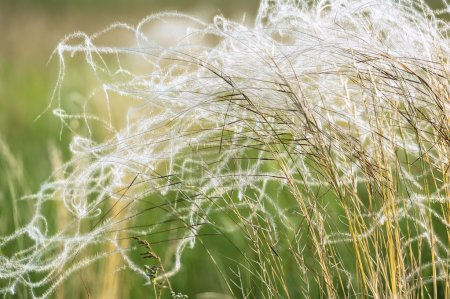 Photo for Field grass in sunny summer day - Royalty Free Image