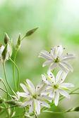 Jarní pole květinyjednoduché geometrické postava