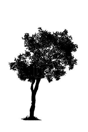 Photo pour Ombres en noir et blanc - image libre de droit