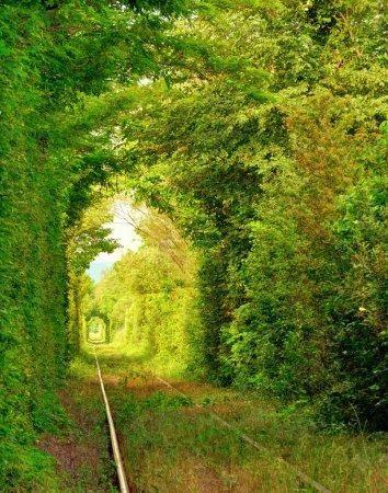 """Photo pour Tunnel naturel de """"l'amour"""" formé par les arbres en Roumanie. - image libre de droit"""