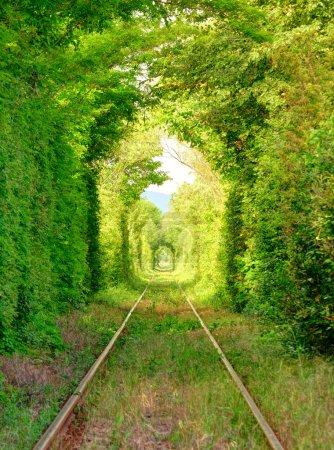 """Photo pour Tunnel naturel de """"l'amour"""" formé par les arbres en Roumanie . - image libre de droit"""