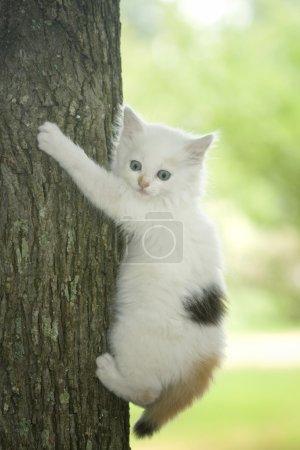 Cat stuck in a tree