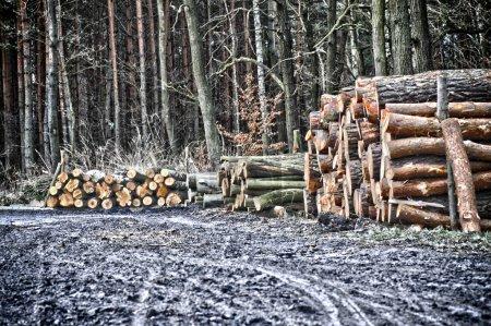 Cut wood in forest in Kleszczów near Gliwice...