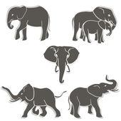 Sada slonů bw