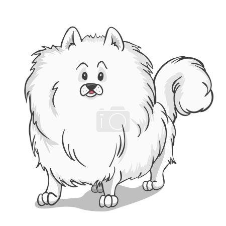 Pomeranian dog white