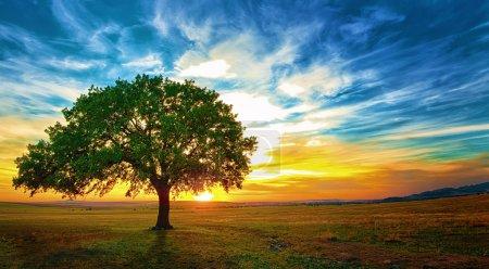 Photo pour Chêne dans un magnifique coucher de soleil Macin Mountains - image libre de droit