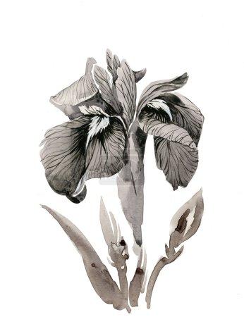 Photo pour Belle iris peint à l'aquarelle - image libre de droit