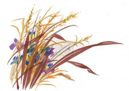Photo pour Herbes dessinés à la main - image libre de droit