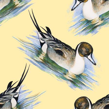 Seamless pattern with Wild ducks