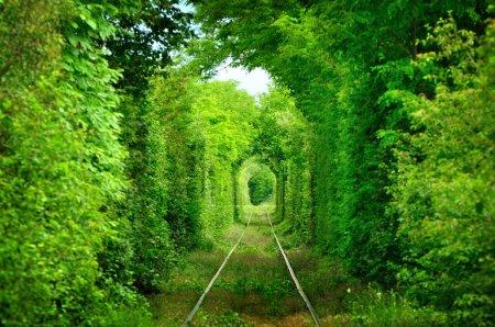 Photo pour Tunnel naturel formé par les arbres en Roumanie, tunnel d'amour - image libre de droit