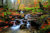 Forest river with leaves