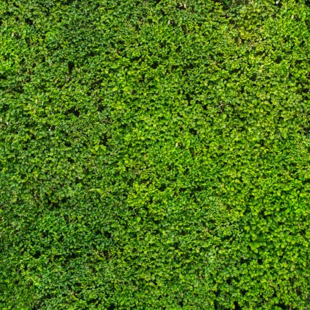 abstract green hedge background