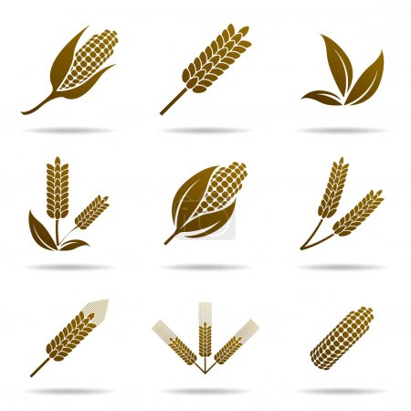 Wheat and rye. Elements for design. Icon set.
