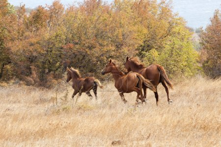 wild horses galloping at the field