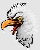 Balded eagle