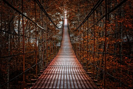 Long Steel Suspension bridge in the forest