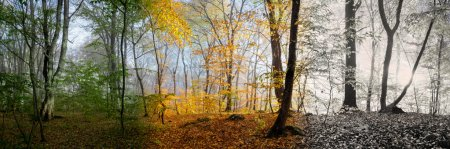Photo for Beautiful morning scene in the forest, wood panorama changing seasons - Royalty Free Image